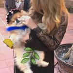 sombrero puppy